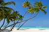 Coconut palms, Lankanfinolhu island, Maldives (Nick Brundle - Photography) Tags: maldives beach nikond750 travel nature island indianocean vacations landscape gettyimages turquoise idyllic coconutpalmtree nikon1424mmf28