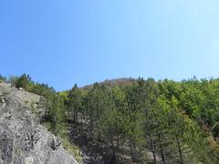 DSCN9571 (Gianluigi Roda / Photographer) Tags: apennines latesummer summer 2012 mountains geologicalevidences geologicaloutcrops trees rocks landscapes appenninobolognese crocedeicolli