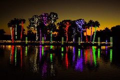 Dusk (oybay©) Tags: phoenixzoo phoenix zoo zoolights holidaylights holiday lights color colors colour colorful trees reflection mirror unique water different