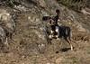 Nasco (bulbocode909) Tags: suisse chiens animaux nature montagnes
