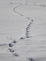 Kam? / Where? (Damijan P.) Tags: zima winter sneg snow slovenija slovenia prosenak