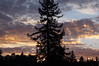 Dec31-17 #4 (juanfulanogarcia) Tags: sunset night sky clouds rays winter pine dusk outdoors west tree