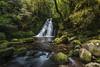 The Cascades Walk (merbert2012) Tags: nsw rainforest walks wandern travel reisen gondwana creeks newengland cascades australia nikon nature landscape planetearth waterfall water outdoor serene garden