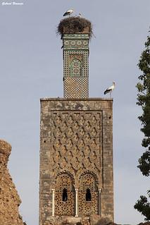 Antiguo minarete - Rabat