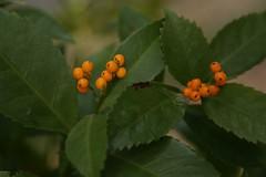 180124007 (murbozero) Tags: murbo japan flower
