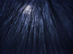 moonlight shadow (Jaco Verheul) Tags: landscape night nightscape samsung s7 snapseed trees tree cloud clouds moon shadow jaco verheul phonephoto perspective forest wood woods bos