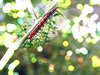 Who knows someday you'll turn into a butterfly ... (Guilherme Alex) Tags: caterpillar insect jungle bokeh focus light sun day orange white life wild animal found exploring forest leaf nature natural art amateur cellphone samsung yeah lovedit beautiful wonderful unique colorfull