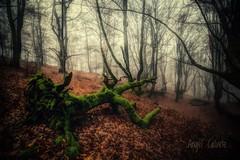 Un día de niebla. (angelcalvetezumalde) Tags: forest fog magicalforest winter niebla bosquemágico bosque amazing landscape paisaje spain
