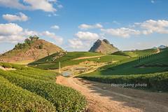 _J5K1434.0118.Chè Đài Loan.Tân Lập.Mộc Châu.Sơn La (hoanglongphoto) Tags: asia asian vietnam northvietnam northwestvietnam landscape scenery vietnamlandscape vietnamscenery vietnamscene sunny afternoon sunnyafternoon tree hillside tea teatree teahill sky bluessky hdr canon canoneos1dsmarkiii tâybắc sơnla mộcchâu chèđàiloan phongcảnh đồichè sườnđồi buổichiều nắng nắngchiều bầutrời bầutrờixanh phongcảnhmộcchâu đồichèmộcchâu sunlight tânlập canonef2470mmf28liiusm road conđường roadpí clouds cloud mây nhữngđámmây tophill đỉnhđồi