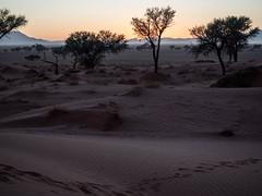 Sunrise light over Namibian desert (Melvinia_) Tags: olympusomdem1 namibia namibie desert désert namibrand naukluft namibrandfamilyhideout landscape sand africa afrique afriqueaustrale sunrise leverdesoleil geoafrica