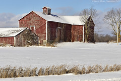 9290 (ontario photo connection) Tags: barns barn winter hastings ontario canada landscapes farm farming