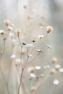 winter in bloom