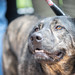2018 Austin Pets Alive! Puppy Bowl