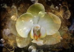 Last Orchid (Diana Thorold.) Tags: dianathorold psp 2018 flickr flamingpear texture manipulate photomanipulation colourful tas awardtree please tag with magicunicornverybest