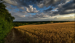 As time goes by (trojanhorse1956) Tags: cornfield mount the guildford surrey clouds sky sunset landscape scenery nikon d750