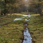 The Trail thumbnail