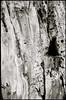 Spillern (Harald Reichmann) Tags: niederösterreich spillern holz baumstamm verwitterung lebensraum analog film nikonfe2 oberfläche muster zeichen code struktur