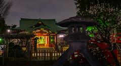 Shrine & Lantern (tokyobogue) Tags: tokyo japan kameido nikon nikond7100 d7100 sigma sigma1750mmexdcoshsm night evening dusk longexposure kameidotenjinjinja kameidotenjinshrine shrine shitamachi plumblossom ume blossoms