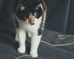 *** (donnicky) Tags: blurredbackground cat closeup dof domesticanimal home indoors nopeople oneanimal pet publicsec selectivefocus serious sofa whiskers лилу