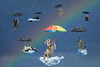 Raining Cats and Dogs Edit (Chris Willis 10) Tags: rainbow cats dogs flying raining clouds umberella