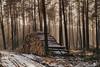 Wald_01.jpg (beginner17) Tags: fuji xt1 takumar 55mm m42 sonne strahlen schnee nadelbaum rays beam