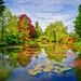 Recent Faves - Monet's Garden