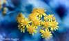 Spring Revival (frederic.gombert) Tags: flower flowers sun sunlight color colorful sunny blue colors macro nikon park garden winter spring