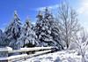 Pining away (buffaloalice) Tags: minnesota snowstorm haycreek landscape creek cow barn red snowday bridges