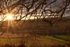 (Idoya.) Tags: atardecer crepúsculo campo árbol