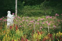 Cebu's Sirao Garden - Little Amsterdam (Kristina A. Foto) Tags: cebu siraogarden littleamsterdam nature flowers visayas philippines