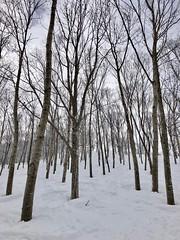 tree run!? (peaceful-jp-scenery (busy)) Tags: madarao powder snow ski resort 斑尾高原 スキー場 雪 飯山 長野 日本 iphone8