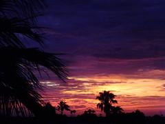 Purple Haze (Scott Douglas Worldwide) Tags: sky s sunrays smiling sun sunset perfect peaceful p paradise palmtree palm palms palmtress pretty pink pp mystical m mountains misty magic military orange odd orangesun orangeglow old oldsoul oblivion yuma yumaaz y yy az arizona awesome america amature american