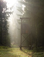 Waiting for gnomes and fairies? (:Linda:) Tags: germany thuringia village bürden woods huntersperch mist conifer