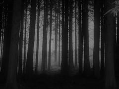 Deep (Tobymeg) Tags: tree deep forest gloom scotland mist panasonic dmc fz72