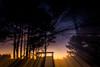 coup de zoom sur le couché de  soleil (A Crokaert प्रकृति र परिद) Tags: effetetambiance lieux nature plante arbre arjuzanx contrejour couchédesoleil zooming