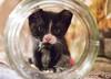 20121031_0889c (Fantasyfan.) Tags: kitten fantasyfanin