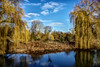 windmill in the willows (Paul Wrights Reserved) Tags: reflection reflections sky weepingwillows trees green grass lake view scene scenic windmill colour colourful color cloud whispy tree water park wood field cheshunt cheshuntlakes