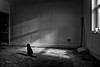 the cat in a dirty room (stocks photography.) Tags: michaelmarsh photographer whitstable appictureoftheweek bw blackwhite photography atmospheric cinematic
