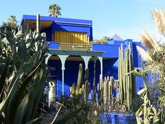 stacheliger Garten- spiky garden (Anke knipst) Tags: marrakesch marokko morocco botanischergarten garten garden kaktus kakteen cactus cacti blau blue yvessaintlaurent jardin majorelle jardinmajorelle