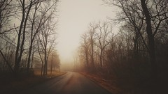 into the woods...(HSS) (BillsExplorations) Tags: fog woods redcoveredbridge princeton illinois historic old slide sliderssunday hss tmt tremendoustuesday