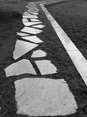 """...and all the roads we have to walk... (CaroDiario) Tags: photoderue streetphotography panasonicdcgh5 olympusm17mmf18 chemin path parc park noiretblanc blackandwhite"