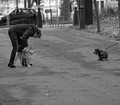 Non ! - No ! (p.franche occupé - buzy) Tags: sony sonyalpha65 objectifminolta minoltalens minolta beercan vintage hdr dxo photolab bruxelles brussel brussels belgium belgique belgïe europe pfranche pascalfranche schaerbeek schaarbeek parcjosaphat josaphatpark dog chien man people snapshot instantané urban parc park human homme deux two skancheli monochrome noiretblanc blackandwhite zwartwit blanconegro schwarzweis μαύροκαιάσπρο inbiancoenero 白黒 黑白 чернобелоеизображение svartochvitt أبيضوأسود mustavalkoinen שוואַרץאוןווייַס bestofbw