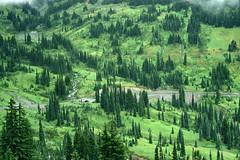 Mt. Rainier National Park (PDX Flyer) Tags: forest tree mountain mountainside landscape green state washington rainier analog slide fog mist pine coniferous conifer road creek cold