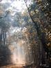 light (Wilma van Oorschot) Tags: wilmavanoorschot angel olympusem5 olympusomde5 olympus light forrest woods walk people nature outdoor lightrays sunbeams sunrays trees
