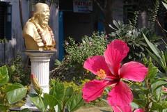 Hibuscus and..Matvad, Navsari, Gujarat, India. (Manoo Mistry) Tags: nikon nikoncoolpixl120 india matvad gujarat flower hibiscus red redflower redhibuscus statue