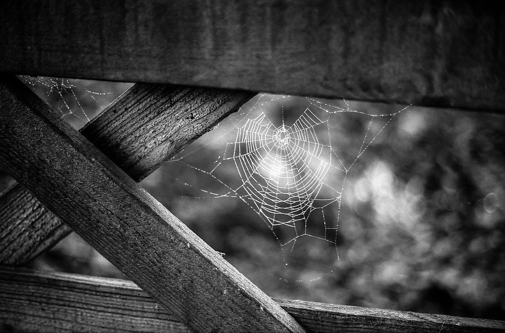 Image result for frozen cobwebs on a gate in misty winter morning light
