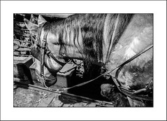 Le cheval et la mine ...indissociables ... (Panafloma) Tags: 2017 architecturebatimentsmonuments bandw bw bâtiments famille géologie métiersetpersonnages nadine nadinebauduin natureetpaysages personnes techniquephoto végétaux animaux blackandwhite centrehistoriqueminierdelewarde charbon cheval fosse mine mineur noiretblanc noiretblancfrance usine france fr
