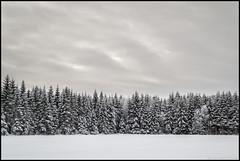 Skogskant (Jonas Thomén) Tags: skog forest woods field åker snö snow winter vinter landscape landskap clouds moln minimalistic minimalistisk hdr