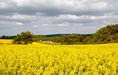 Lehesten Umland 02 (zimmermann8821) Tags: 07349lehesten berge deutschland feld felder landwirtschaft lehesten naturlandschaft sommer sommerfrische thüringen thüringerwald
