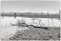 detached (stevefge) Tags: 2017 beuningen hoogwater waal flood winter uiterwaarden water branch chimney fields grey blackandwhite bw zw zwartwit monochrome mono reflectyourworld reflections rivers nederland netherlands nl nature natuur nederlandvandaag gelderland landscape